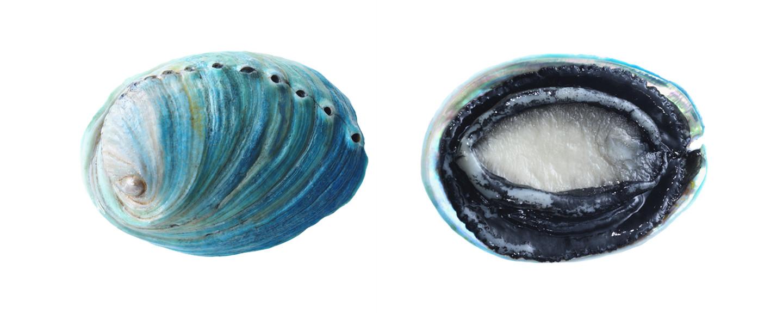 Blue-Abalone