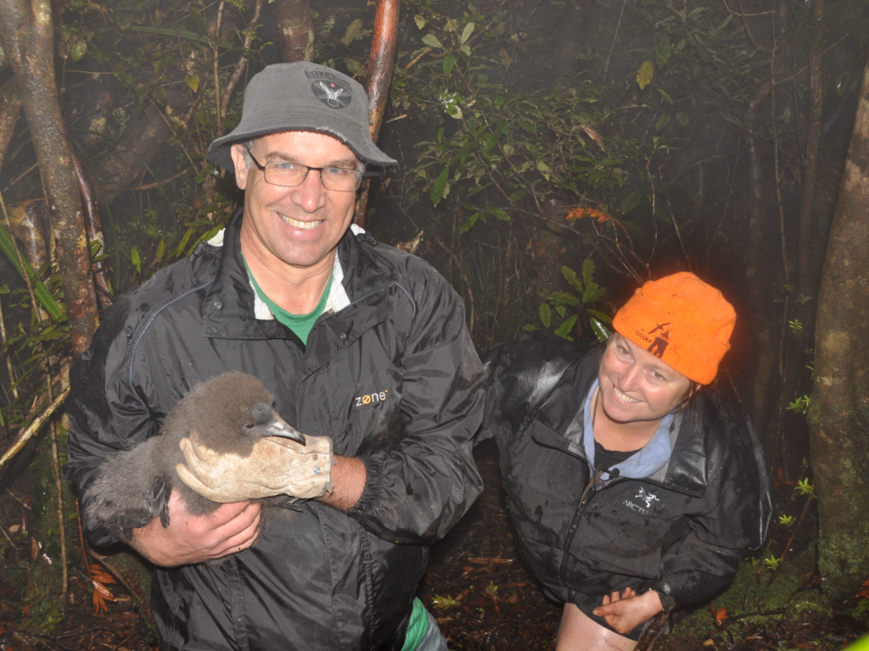 Extra effort helps protect vulnerable black petrels returning to nest, November 2015