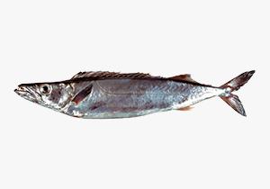 gemfish_1