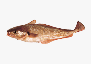 red-cod_1