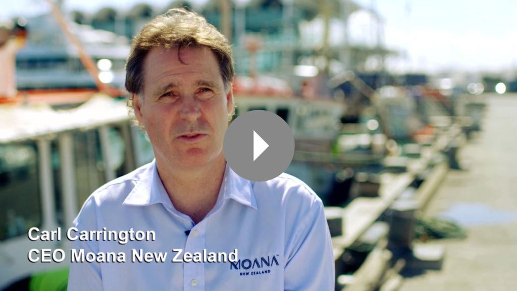 Moana New Zealand & Sanford Launch Maui Dolphin Protection Plan