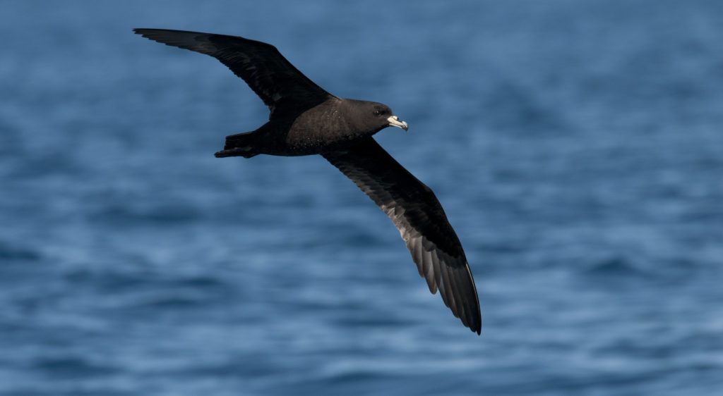 Camera trial to track seabird by-catch continues
